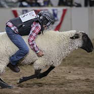 Mutton Bustin' at NWSS